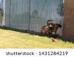 yuma sector  ariz.   us   april ...   Shutterstock . vector #1431284219