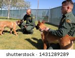 yuma sector  ariz.   us   april ...   Shutterstock . vector #1431289289
