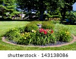 Garden Of Day Lilies In Yard