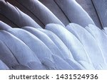 Gray And White Feathers On The...
