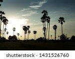 Rice Fields With Palm Sugar...