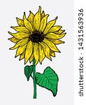 sunflower with leaves... | Shutterstock . vector #1431563936