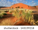 Desert Landscape With  Grasses...