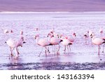 flamingos on lake in andes  the ... | Shutterstock . vector #143163394