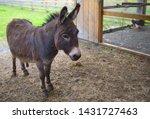 Donkey jackass farm mammal mule ...