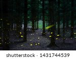 Stock photo firefly flying in the forest many fireflies in the bush at summer night 1431744539