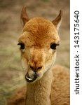 Funny  Happy Alpaca Llama With...