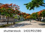 red flowers trees at  boulevard ... | Shutterstock . vector #1431901580