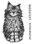 Stock photo fluffy cat 143193598