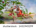 Cedar Waxwing And Male Norther...