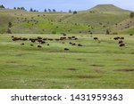 Rolling Hills And Flatlands Of...