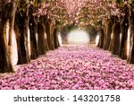 the romantic tunnel of pink... | Shutterstock . vector #143201758