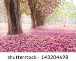the romantic tunnel of pink... | Shutterstock . vector #143204698