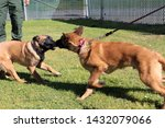 yuma sector  ariz.   us   april ...   Shutterstock . vector #1432079066