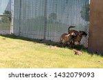 yuma sector  ariz.   us   april ...   Shutterstock . vector #1432079093