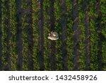 Soybean Farmer With Drone...