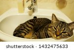 Stock photo a tabby cat is sleeping in the basin 1432475633