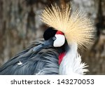 crowned crane profile with... | Shutterstock . vector #143270053