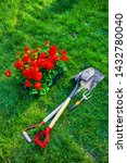 Gardening Tools And Geranium...