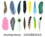 Set Of A Variety Of Feathers  ...