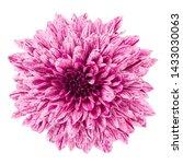 beautiful pink flower in dew... | Shutterstock . vector #1433030063