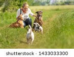 Stock photo dog sitter walks with many dogs on a leash dog walker with different dog breeds in the beautiful 1433033300