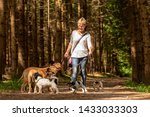 Stock photo walk with many dogs on a leash dog walker with different dog breeds in the beautiful forest 1433033303