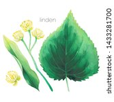 watercolor set of linden... | Shutterstock . vector #1433281700