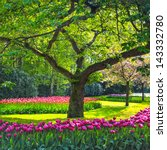 Tree And Tulip Flowers Garden...