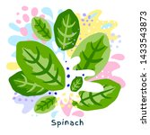 fresh green spinach vegetable... | Shutterstock .eps vector #1433543873