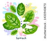 fresh green spinach vegetable... | Shutterstock .eps vector #1433543873