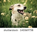 Dog In The Dandelion Meadow ...