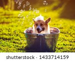 Stock photo cute funny puppy dog standing in a metal basin washed on the street in the summer on a hot sunny 1433714159