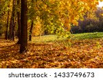 Autumn Forest Landscape With...