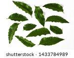 neem leaves  many green leaves... | Shutterstock . vector #1433784989