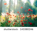 red poppies in the forest at... | Shutterstock . vector #143380246