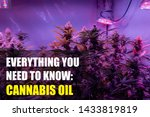 cannabis oil concept  on the... | Shutterstock . vector #1433819819