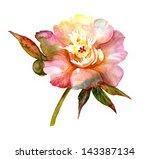 watercolor peony   Shutterstock . vector #143387134