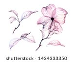 Stock photo transparent watercolor flower tree branch one big floral set petals leaves painting spring 1434333350