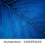 bright blue leaf texture for a...   Shutterstock . vector #1434392633
