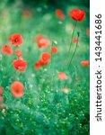 poppy | Shutterstock . vector #143441686