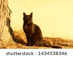 black cat sitting in front of a ... | Shutterstock . vector #1434538346