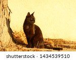 black cat sitting in front of a ... | Shutterstock . vector #1434539510
