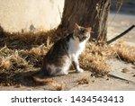 cute furry wild cat sitting on... | Shutterstock . vector #1434543413
