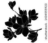 magnolia flower drawing and...   Shutterstock .eps vector #1434555923