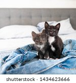Two Tiny Kittens Sitting On...