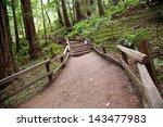 Trail Through Muir Woods...