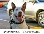 happy white and brown dog in... | Shutterstock . vector #1434960383