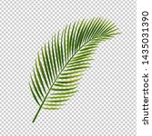 palm leaf isolated transparent... | Shutterstock . vector #1435031390