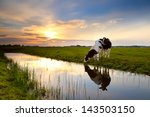 Two Cows On Pasture By River A...